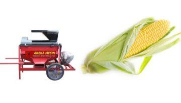 budidaya-dan-cara-bercocok-tanam-jagung